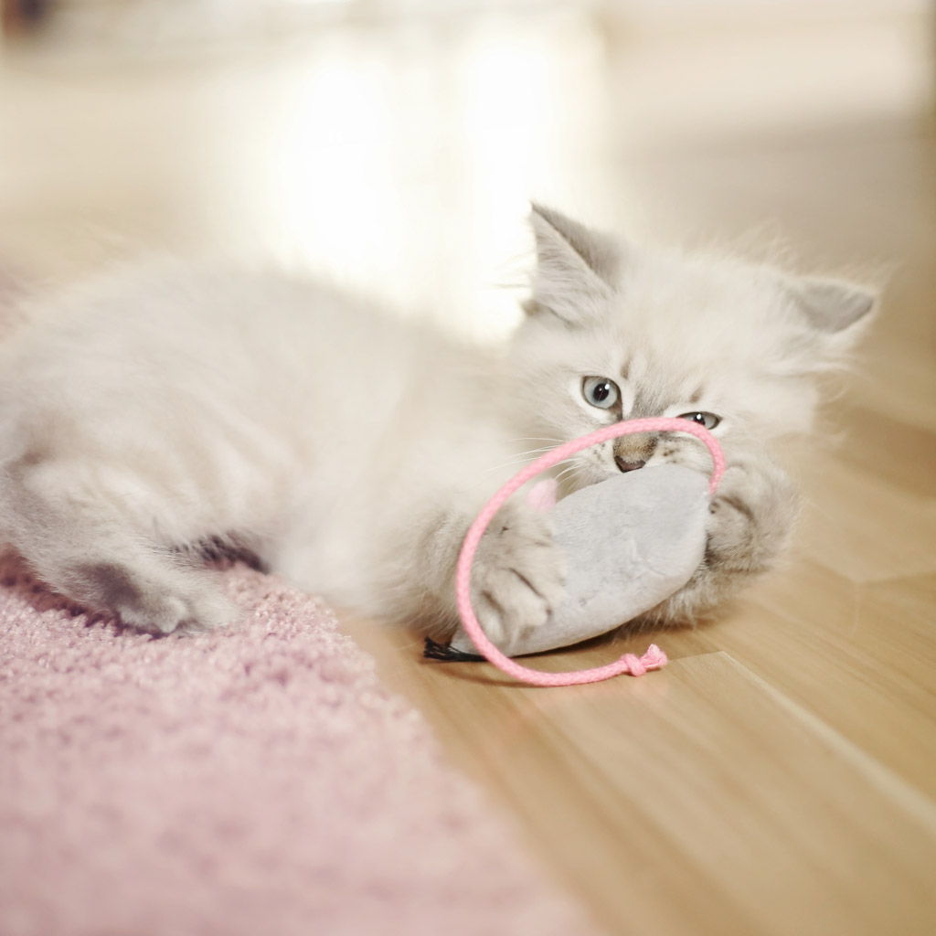 Katzenspielzeug selber nähen: Stoffmaus-Freebook