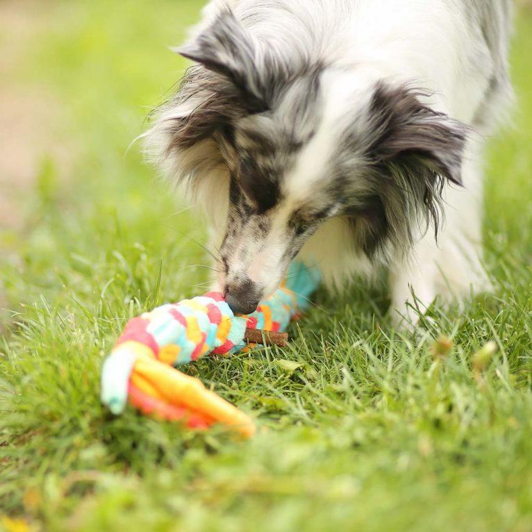 Zergel als Hundespielzeug selber machen