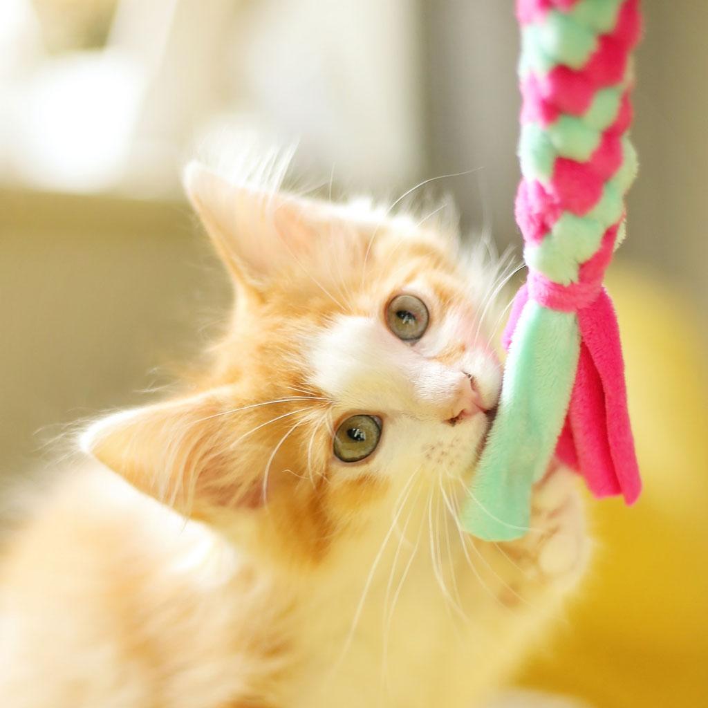 Katzenspielzeug Selber Machen Mini Zergel Diy Kullaloo