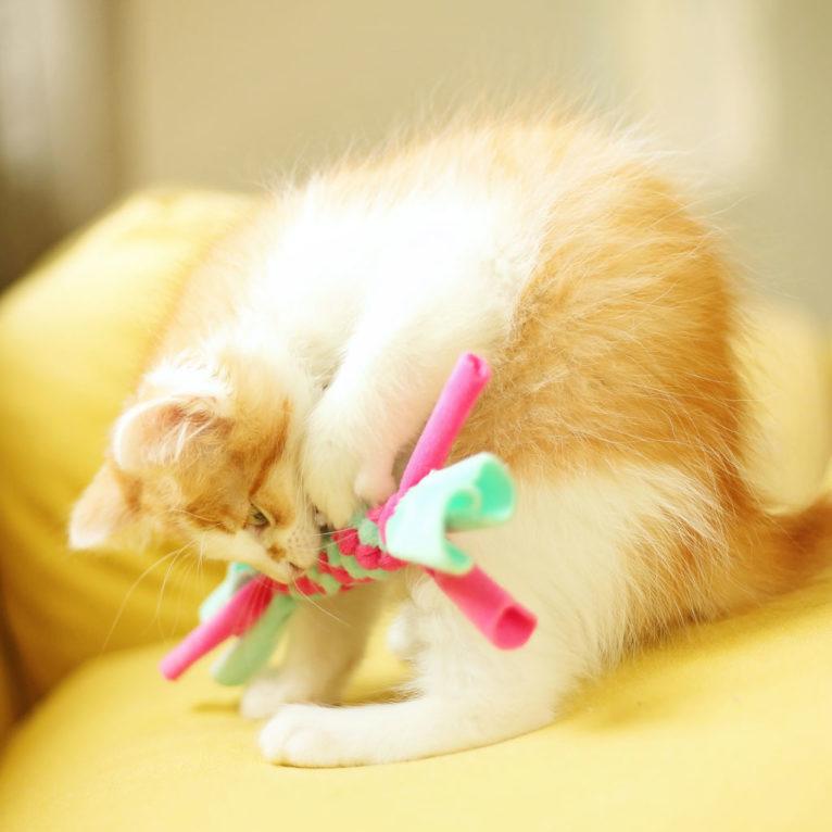 Katzenspielzeug selber machen: Mini Zergel