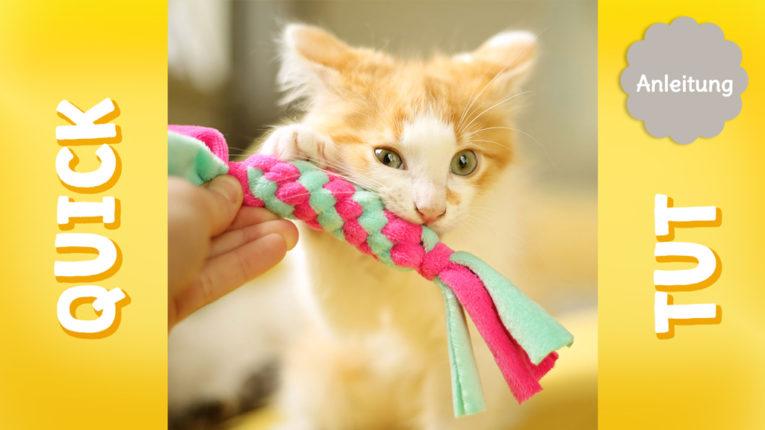 Quick Tut Video: Zergel selber machen für Katzen und Hunde