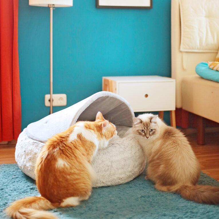 "Katzen- oder Hundedonut nähen mit Schnittmuster ""STROLCHI"""